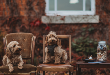 Healing Manor Hotel Dog Friendly Menu
